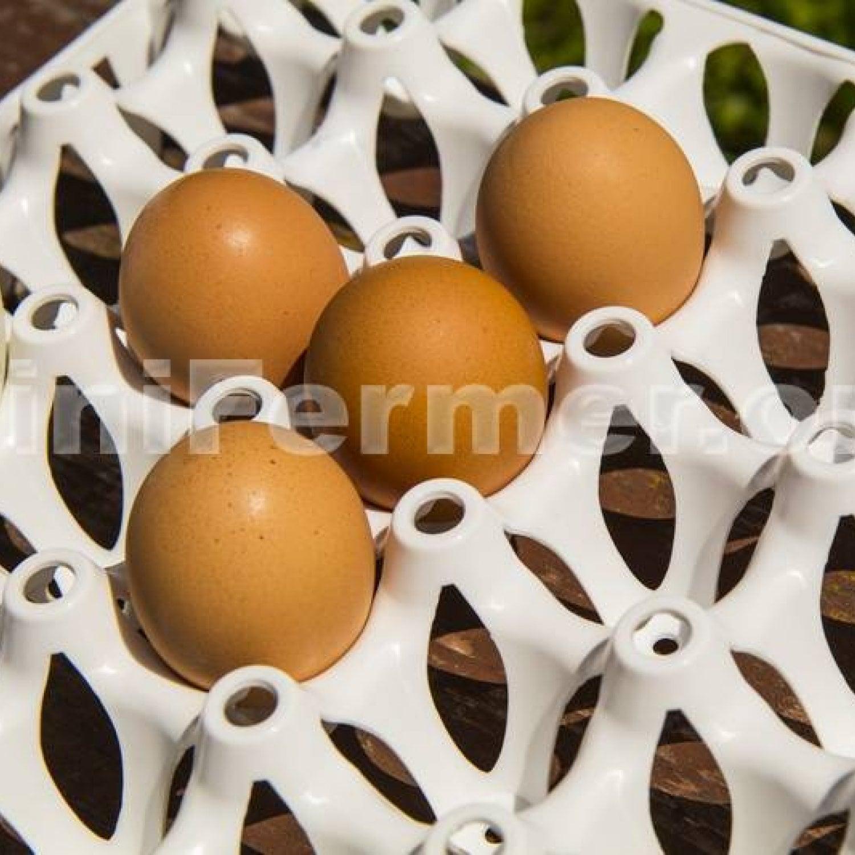 Лоток для яиц на 30 шт
