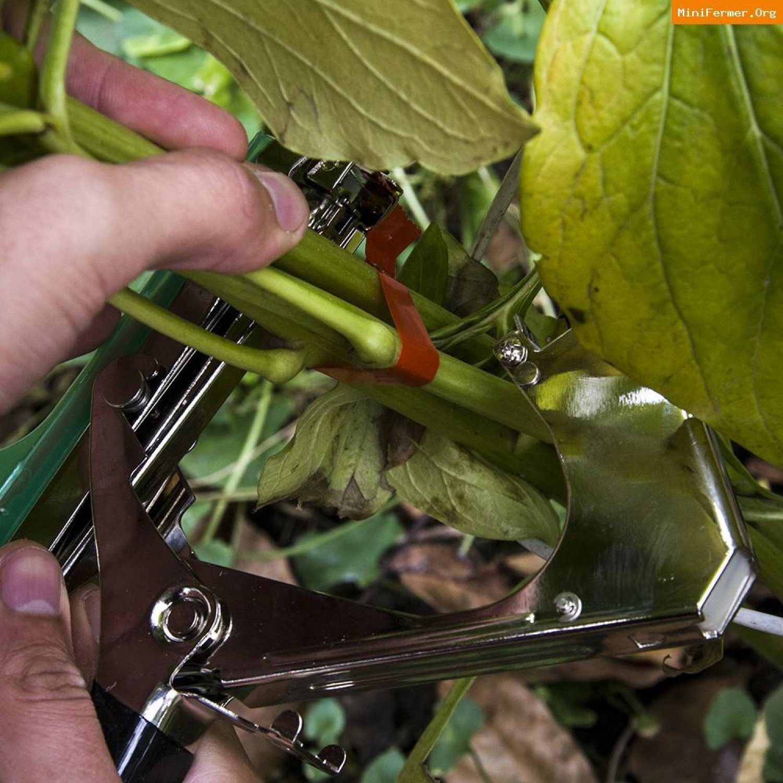 Подвязка растений (тапенер) ТАП-1