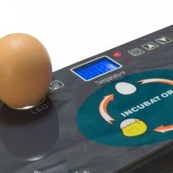 Инкубатор для яиц автоматический И-12_1 на 12 яиц